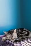 Милый кот на поле Стоковое фото RF