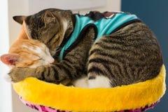 Милый кот на поле Стоковые Фото