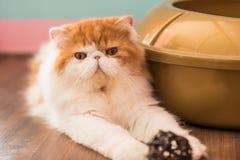 Милый кот на поле Стоковое Изображение RF