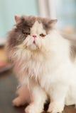 Милый кот на поле Стоковая Фотография