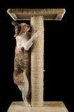 Милый кот при закрытые глаза царапая царапая столб Стоковое Изображение