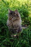 Милый кот Стоковое Изображение