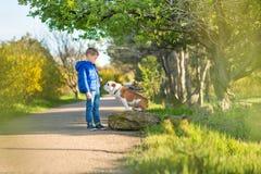 Милый красивый стильный мальчик наслаждаясь красочным парком осени с его собакой лучшего друга красной и белой английской быка De стоковые изображения