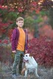 Милый красивый стильный мальчик наслаждаясь красочным парком осени с его собакой лучшего друга красной и белой английской быка De стоковая фотография