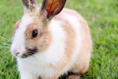 Милый кролик зайчика на траве Стоковая Фотография