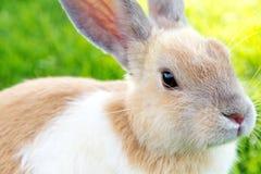 Милый кролик зайчика на траве Стоковое Изображение RF