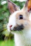Милый кролик зайчика на траве Стоковое Изображение