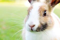 Милый кролик зайчика на траве Стоковые Изображения RF