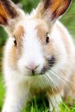 Милый кролик зайчика на траве Стоковые Изображения