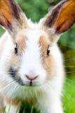 Милый кролик зайчика на траве Стоковое фото RF