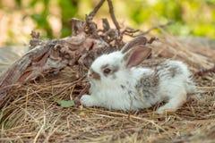 Милый кролик и, который подвергли действию корни Стоковые Фотографии RF