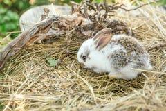 Милый кролик и, который подвергли действию корни Стоковое фото RF