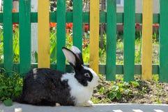 Милый кролик на предпосылке желт-зеленой загородки и красных тюльпанов Стоковые Изображения