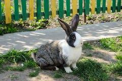 Милый кролик на предпосылке желт-зеленой загородки Стоковое Изображение RF