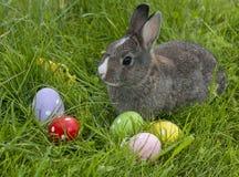 Милый кролик пасхи Стоковые Изображения