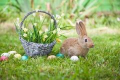милый кролик травы Стоковое фото RF