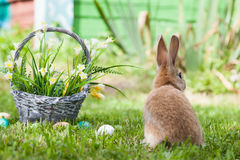 милый кролик травы Стоковые Фото