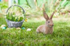 милый кролик травы Стоковое Фото