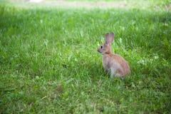 милый кролик травы Стоковое Изображение RF
