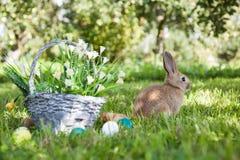 милый кролик травы Стоковые Фотографии RF