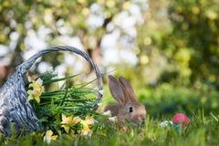 милый кролик травы Стоковые Изображения RF