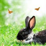 Милый кролик стоковое фото rf