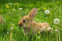 Милый маленький зайчик пасхи стоковое фото rf