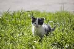 Милый маленький котенок на лужайке Стоковые Фото