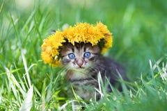 Милый маленький котенок увенчал с chaplet одуванчика Стоковое фото RF