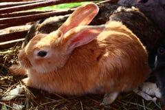милый маленький кролик Стоковое Изображение RF