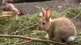 Милый маленький оранжевый кролик видеоматериал