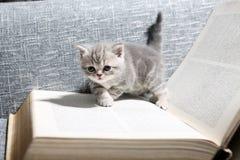 Милый малый котенок Стоковые Изображения