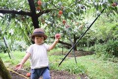милый мальчик выбирает плодоовощи которые свежие персики Стоковое фото RF