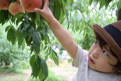 милый мальчик выбирает плодоовощи которые свежие персики Стоковые Фото