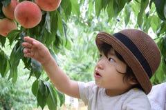 милый мальчик выбирает плодоовощи которые свежие персики Стоковое Фото