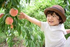 милый мальчик выбирает плодоовощи которые свежие персики Стоковая Фотография