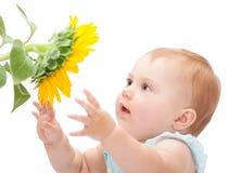 Милый младенец с солнцецветом стоковая фотография