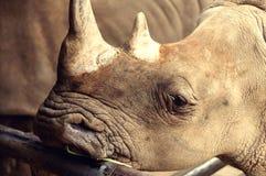 Милый носорог макроса стоя с кожей текстуры Стоковое фото RF