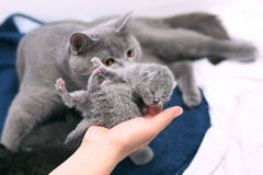 Милый один котенок дня старый Стоковая Фотография RF
