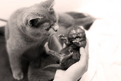 Милый один котенок дня старый Стоковая Фотография