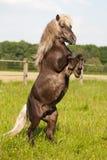 Милый пони делает маленького человека Стоковое Фото