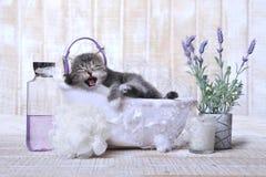 Милый прелестный котенок в ванне ослабляя Стоковые Изображения RF