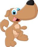 милый представлять собаки Стоковое Изображение