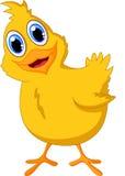 Милый представлять цыпленка младенца Стоковое Изображение RF