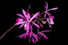 Милый пук фиолетовых орхидей стоковая фотография