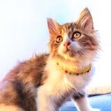 Милый пушистый белый котенок tabby Стоковые Фото
