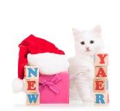 Милый пушистый котенок Стоковая Фотография RF