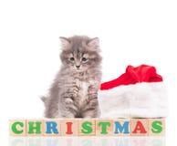 Милый пушистый котенок Стоковые Изображения