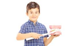 Милый ребенок держащ dentures сделанные из гипсовой повязки и зуба Стоковые Изображения