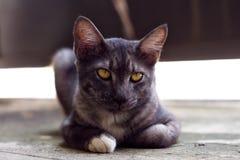 Милый серый кот лежа на том основании Стоковое Изображение RF